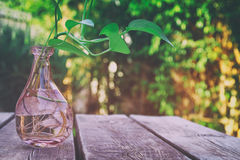 Green plant on wooden table outdoors afternoon Royalty Free Stock Photos