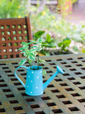 Green plant on wooden table Royalty Free Stock Photos