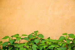 Green plant and yellow wall Stock Image