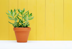Green plant on yellow wooden background Stock Images