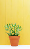 Green plant on yellow wooden background Royalty Free Stock Image