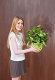 Green plant Stock Image
