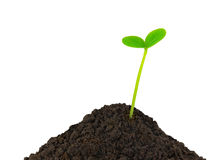 Green plant seedling Stock Images