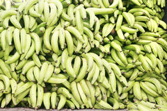 Green plantains Royalty Free Stock Photo