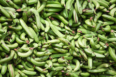 Green plantains (bananas) Stock Images