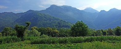 Green plantations under the Apuan Alps in Italy Stock Photo