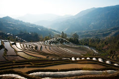 Green planted mountain rice field seed bed landscape in China. Green planted mountain rice field seed bed landscape in China with nobody around during the day Royalty Free Stock Photo