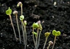 green planterar litet Royaltyfri Bild