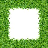 green planterar litet Arkivfoton