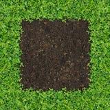 green planterar litet Royaltyfria Bilder