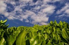 green planterar skyen royaltyfri fotografi