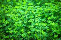 Green plants Stock Photography
