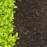 Green plants. Growing on soil manure stock photos