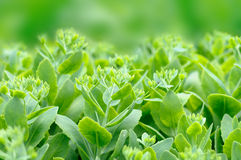 Green plants Royalty Free Stock Images