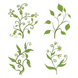 Green plants. Set of vintage green plants vector illustration