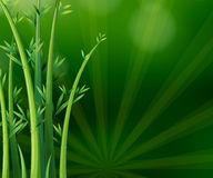 Green plants Stock Images