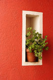 Green plants. On the wall Stock Photography
