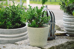Green plants arranged in a stone garden Royalty Free Stock Photo