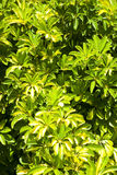 Green plants as background Stock Photography