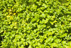 Green plants as background Stock Photos