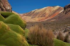 Green Plants in the Atacama Desert Stock Photos