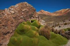 Green Plants in the Atacama Desert Stock Photo