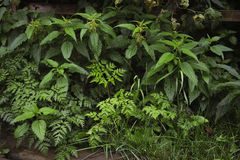 Green plants. Background. Royalty Free Stock Images