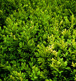 Green Plants Background Stock Images