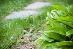 Green plants background Royalty Free Stock Photos