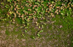 Moss on the ground. Green plants on a background of moss Royalty Free Stock Photography