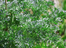 Green plants background, natural close up vibrant leaves. Stock Photography