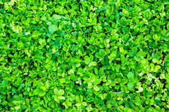 Green Plants Background Royalty Free Stock Image