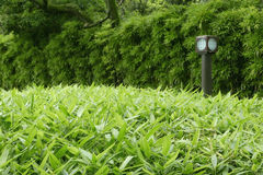 Green plants, bamboo trees and Japanese traditional floor lamp. Green plants, bamboo trees and the Japanese traditional floor lamp Stock Images