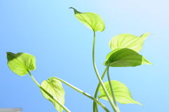 Green plants. Bathed in the blue sky under the warm eyes of green plants Royalty Free Stock Photos