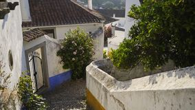 Narrow street of tourist town. Green plants and beautiful houses located on small street of Obidos, Portugal stock footage