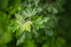 Green plants. Stock Photography