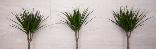 Green plants on beige background Stock Photo