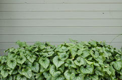 Green plants and blank wall for a sign Royalty Free Stock Photography
