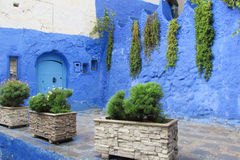Green plants at the blue city wall Royalty Free Stock Image