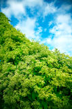Green plants and blue sky. And Stock Photo