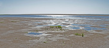Green plants/blue water at the wadden sea, Denmark Stock Photos