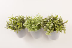 Potted herbs on wall Royalty Free Stock Photo