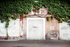 Green Plants in Brown and White Concrete Wall Royalty Free Stock Photos