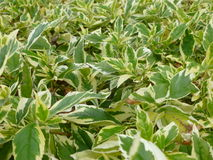Green Plants Royalty Free Stock Photos