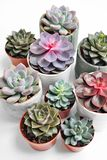 Green plants in cement concrete and white pots, colored succulents, stand on white table and shelf. The concept of. Green plants in cement concrete and white stock image