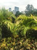 Green plants in city park garden with view of city in background. Lovely green plants in park garden with skyscrapers of Boston in the background Royalty Free Stock Images