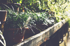 Green plants in clay flower pots in botanical garden glasshouse Stock Photography