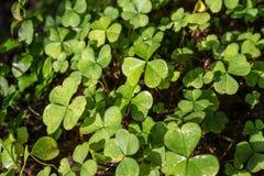 Green plants closeup Royalty Free Stock Photo