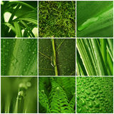 Green plants - collage Royalty Free Stock Images