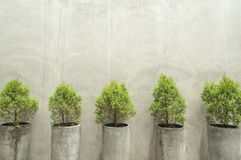 Green plants in concrete pots on concrete wall Royalty Free Stock Photos